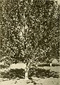 Apple growing in the Pacific Northwest; a condensation of lectures, experiments and discussions (1911) (14783963535).jpg