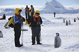 Aptenodytes forsteri -Snow Hill Island, Antarctica -juvenile with people-8.jpg
