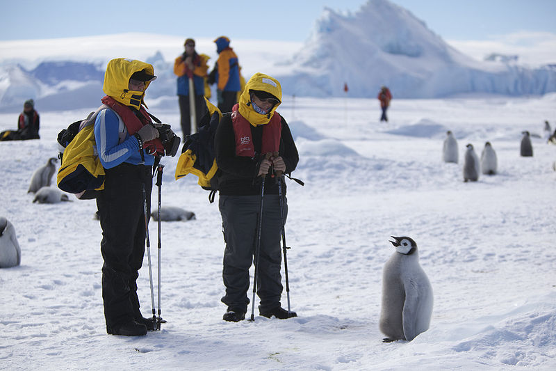 Payl:Aptenodytes forsteri -Snow Hill Island, Antarctica -juvenile with people-8.jpg