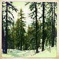 Arc 1800 - panoramio.jpg