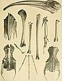 Archives du Mus©um d'histoire naturelle de Lyon (1903) (19706196113).jpg