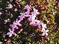 Arctic Flowers - 11 (7569328690).jpg