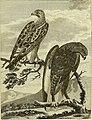 Arctic zoology (1785) (14770679133).jpg