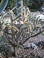 Arizona Cactus Garden 067.JPG