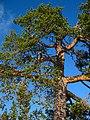 Arjeplog V, Sweden - panoramio.jpg