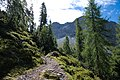 Arosa - trail 3.jpg