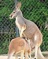Assiniboine Park Zoo, Winnipeg (480533) (24801737280).jpg