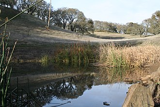 Augustin Bernal Park - Pond in Augustin Bernal Park