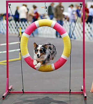 When a jumping dog is a good thing!