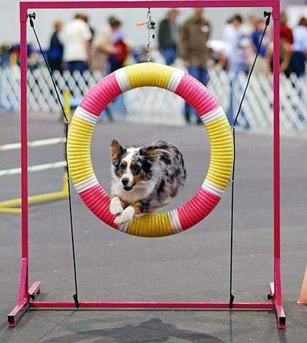 Negative Punishment Dog Training