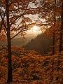 Autumn (17261397).jpeg