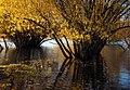 Autumn at Lake Tekapo NZ (25) (8671202690).jpg