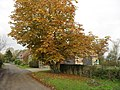 Autumn colour in Hardwick - geograph.org.uk - 1591528.jpg