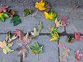 Autumn leaves, Есенски лисја.JPG