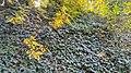 Autumn season in Butanic Garden فصل پاییز در باغ بوتانیکال تفلیس 25.jpg