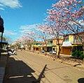 Avenida Paraíso, com ipês florados.jpg