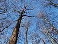 Bäume unter Blauem Himmel im Januar 2016 in Deutschland (5).JPG