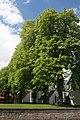 Büren-KastanienKönigstraße20-1-Asio.JPG