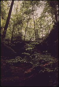 BANKHEAD NATIONAL FOREST, 90 MILES NORTH OF BIRMINGHAM. GASP (GREATER ALLIANCE TO STOP POLLUTION) JOINED ALABAMA... - NARA - 545488.jpg