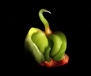 English: Baby Bell pepper, Capsicum annuum whi...