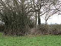 Back to the copse - geograph.org.uk - 2312558.jpg