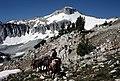 Backcountry rangers lead packtrain in the Eagle Cap Wilderness, Wallowa-Whitman National Forest (36204770551).jpg