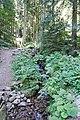 Bad Rippoldsau-Schapbach IMG 3031.jpg
