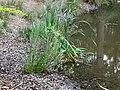 Balade en forêt d'Évreux 018.jpg