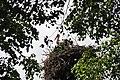 Baltā stārķa ligzda Nr.1524, Suntažu pagasts, Ogres novads, Latvia - panoramio.jpg