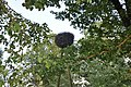 Baltā stārķa ligzda Nr.3014, Mālpils pagasts, Mālpils novads, Latvia - panoramio (1).jpg