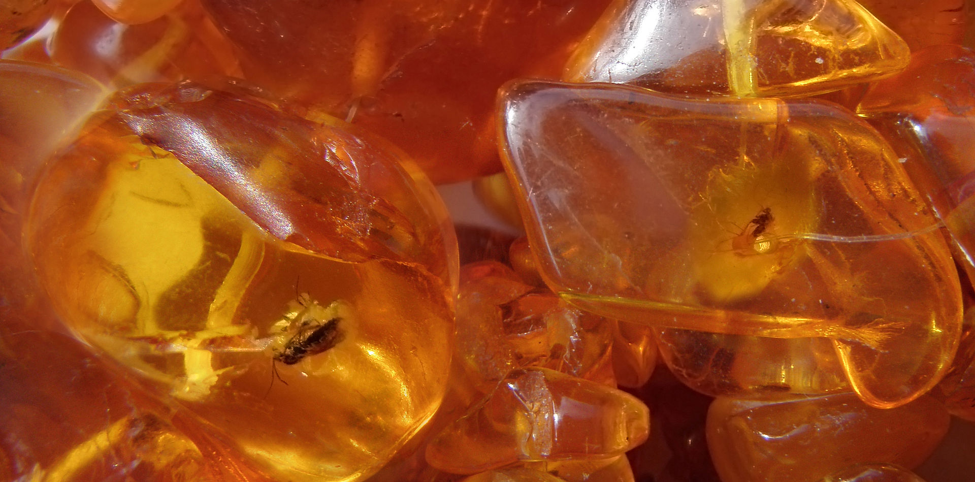 1920px-Baltic_Amber_necklace_with_insects_inclusions.jpg