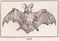 Bat page 255.jpg