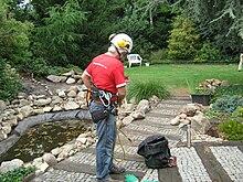 Kletterausrüstung Baum Fällen : Seilunterstützte baumklettertechnik u2013 wikipedia