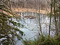 Beaver pond and lodge - Flickr - brewbooks.jpg