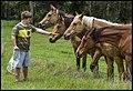 Ben feeding Lacey Creek horses-1 (22247249333).jpg