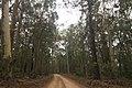 Benandarah NSW 2536, Australia - panoramio (48).jpg