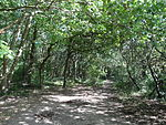 Bentley Priory Stanburn Wood.JPG