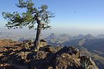Big bend favorite tree.jpg