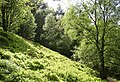 Bilberry glade, Chevin Country Park, Otley - geograph.org.uk - 177049.jpg