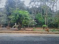 Binatang di Taman Safari.jpg