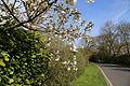 Birds Green, Essex, England - fingerpost at T-junction with garden shrubs and trees.jpg