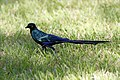Birds MG 7289 (6395634953).jpg