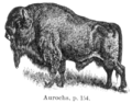 Bison-bonasus.png
