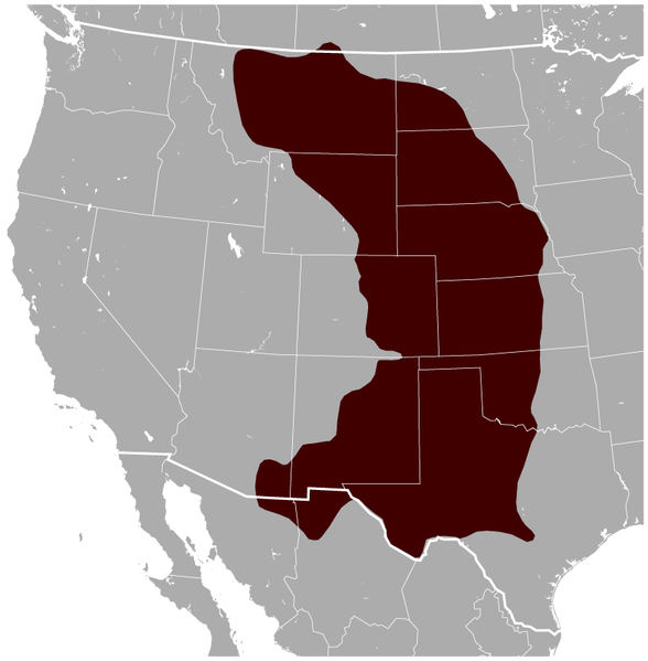 Datei:Black-tailed Prairie Dog Cynomys ludovicianus distribution map.png