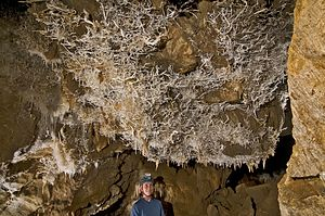 Black Chasm Cave - Helictites in the Landmark Room, on a wall visible from the tourist trail.