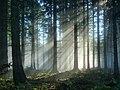 Black Forest (near Elztal) 13 (39559656634).jpg