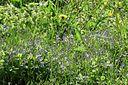 Bloemen in een kruidenrijk, 'verwaarloosd' weiland