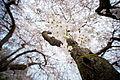 Blossom up (5611193465).jpg