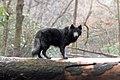 Blue Bay Shepherd on tree.jpg