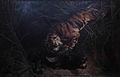 Bluffle surpris par un tigre.jpg